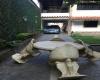 Charallave, Miranda, 5 Habitaciones Habitaciones, Casa, En venta,1111